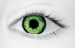 Fashion Eye Accessory Two Tone Green (With Free Solution And Cas