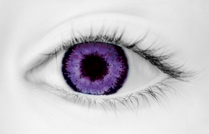 Fashion Eye Two Tone Violet (With Free Solution And Case)